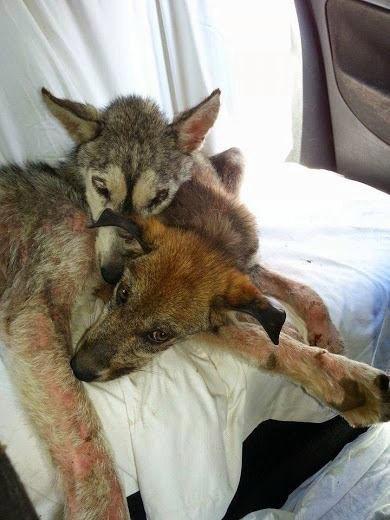 История спасения милого щенк…