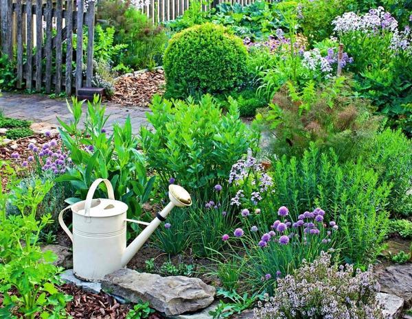английском как красиво посадить пряную траву на саду фото размножение
