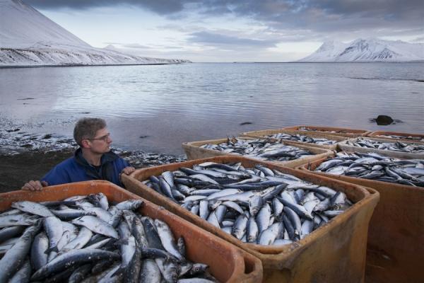 В Норвегии бьют тревогу: ответные меры России на политику ЕС ведут к колоссальным последствиям