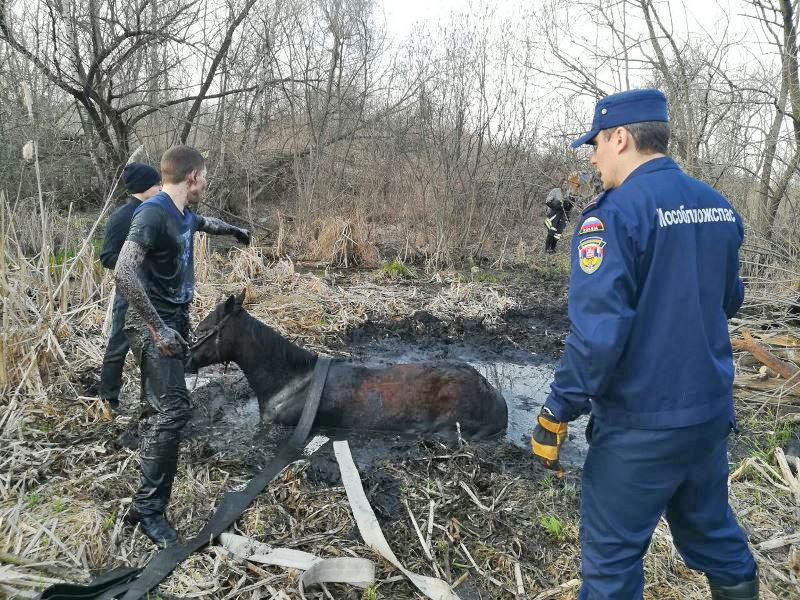 Тяжелая работа – спасать лошадь из болота