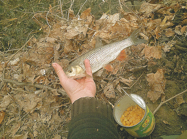 Болонская ловля на малых реках