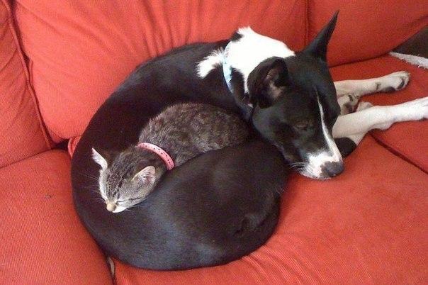 10 котов, которые по уши втр…
