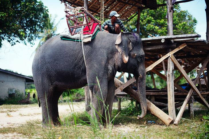 Живой символ Королевства Таиланд
