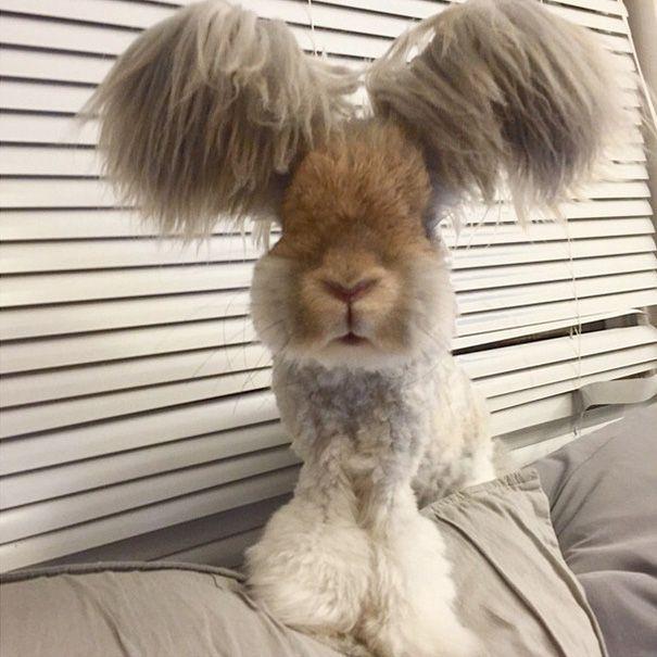 Кролик Уолли на пике популярности