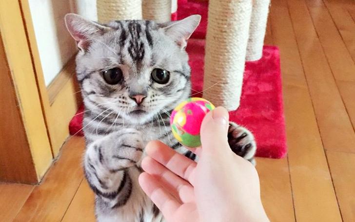 cat_z