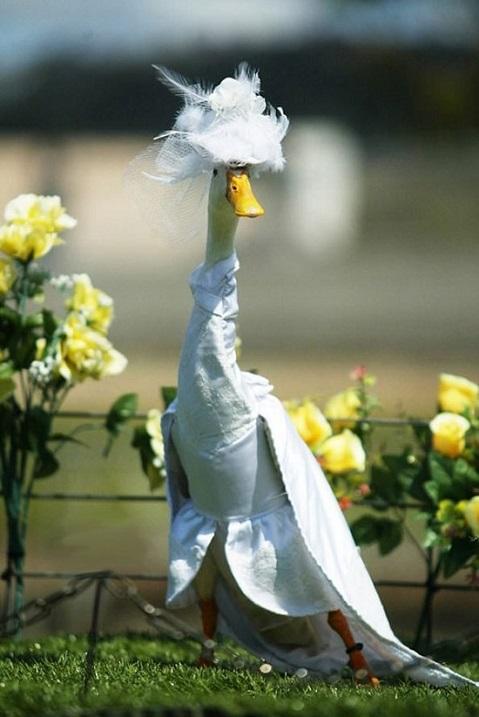 Утки на показе мод в Сиднее, Австралия. Фото