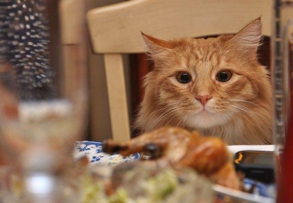 Кот, с которым каждый день - солнечный