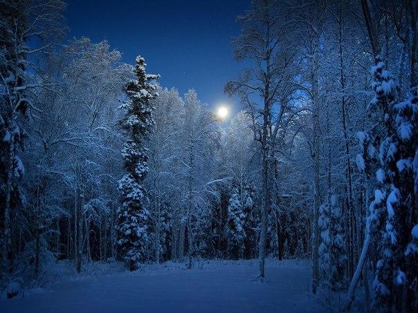Ориентирование ночью по луне и местным предметам