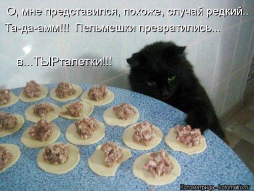 Лучшая котоматрица недели (29 фото)