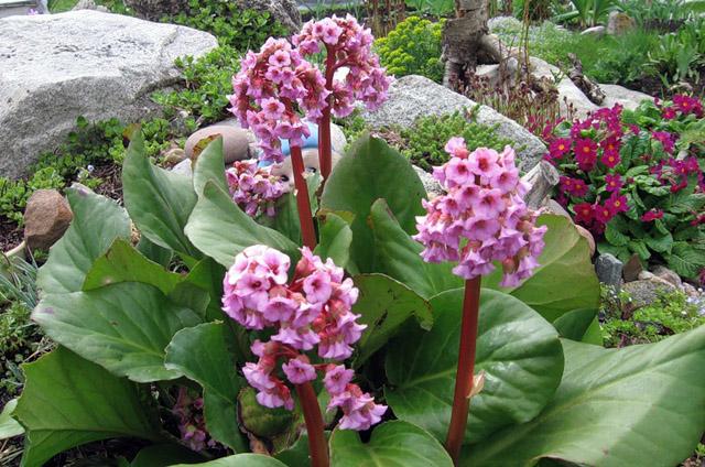 Растения для дома и сада - Страница 218