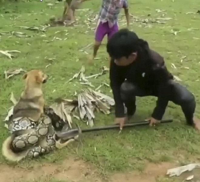«Мы спасем тебя!»: три мальчика храбро атаковали змею, чтобы освободить собаку