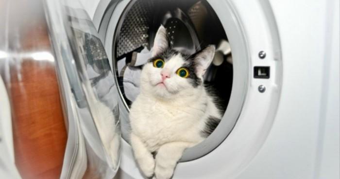 17 мест, где ты не стал бы искать своего кота