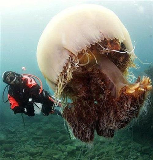 20 гигантских животных, глядя на которых выступает холодный пот на лбу. Вы не поверите своим глазам