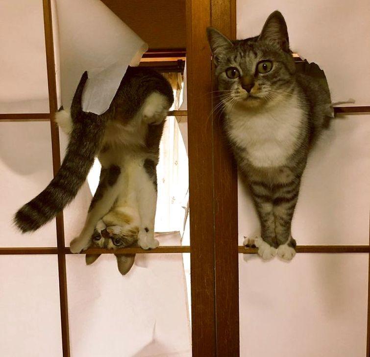 Нелепые и странные выходки кошек))