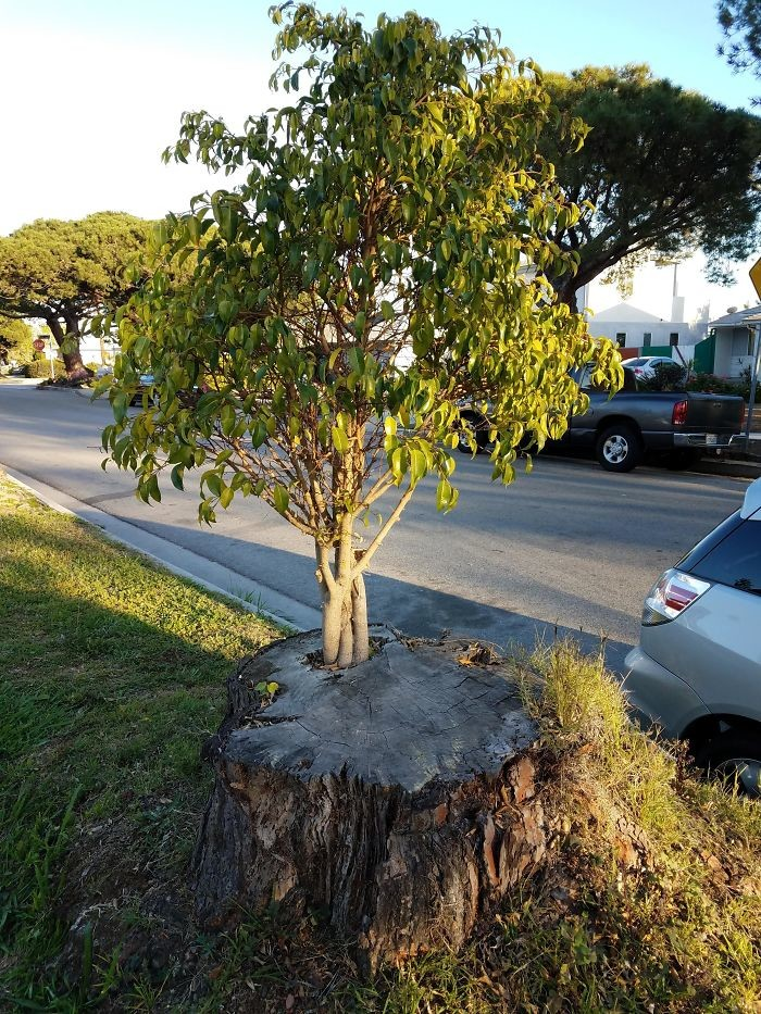 Новая жизнь дерево, живучесть, жизнь, мир, планета, растительность, фото