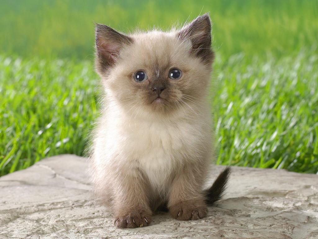 термобелья Термобелье котята фото красивые пушистые милашки способность термобелья впитывать