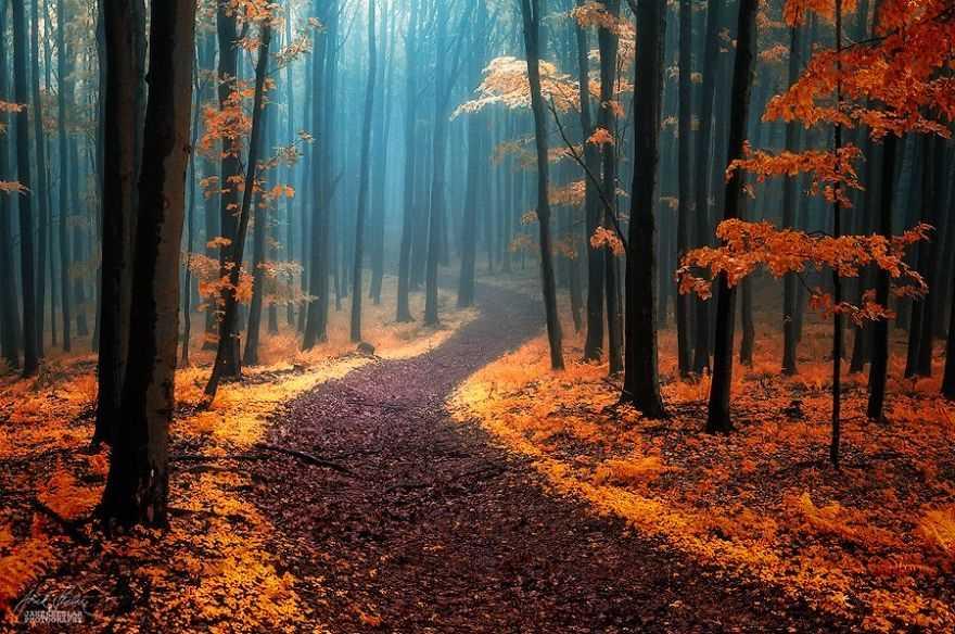 Сюрреалистический осенний лес в фотографиях Янека Седлара