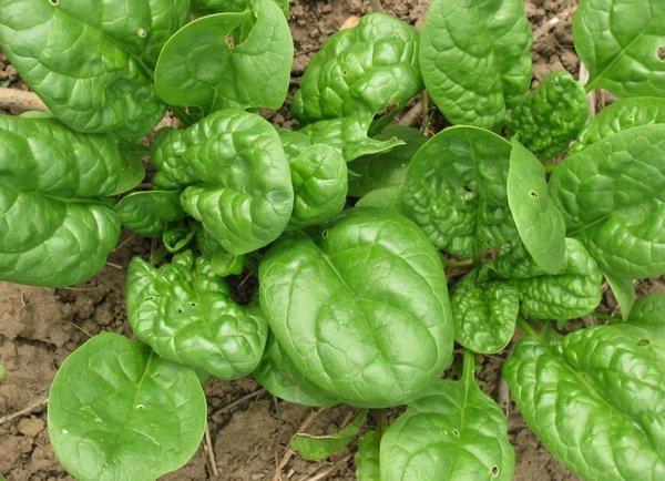 Что посеять семенами в июле?…