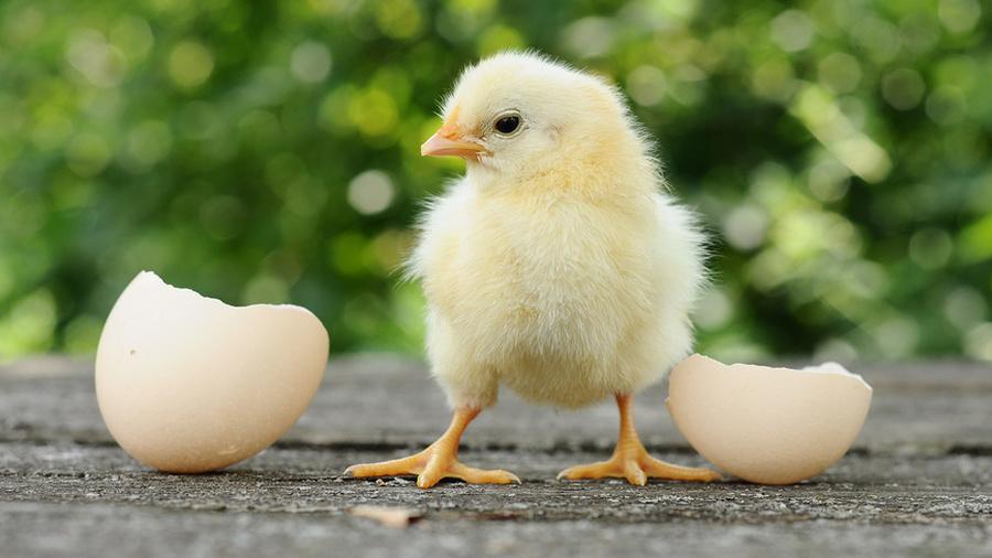 Ожившие яйца