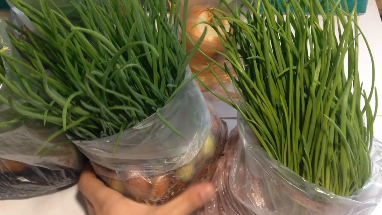 Вот как выращивать зеленый лук без земли и горшка: гениальный метод!