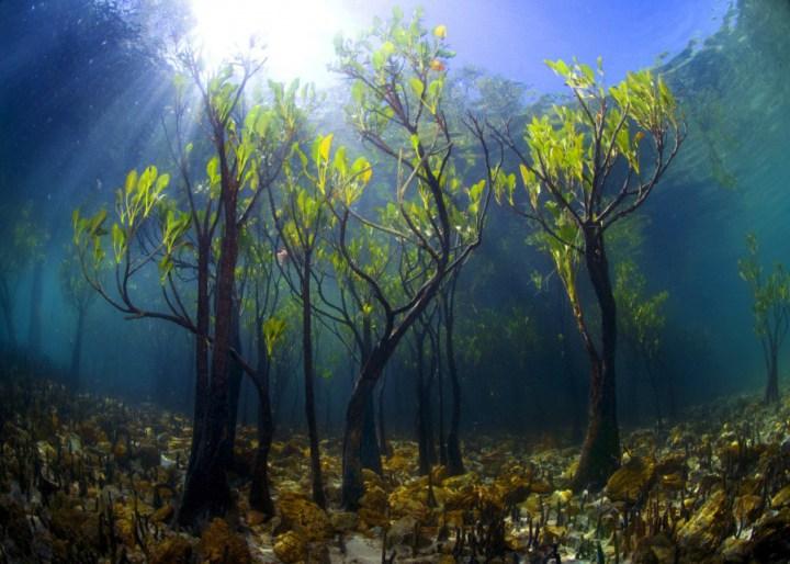 самые необычные деревья на свете