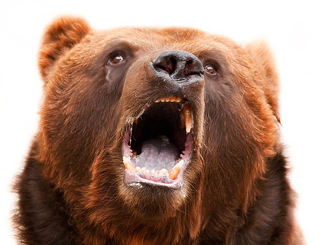 Питание медведя: привады и подкормочные поля