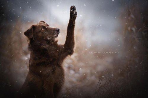 Портреты собак в работах фотографа Анны Гейер (27 фото)