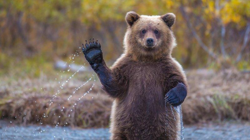 Омичей попросили не кормить медведей и не бегать рядом с ними