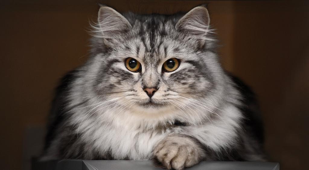 Как кошки определяют негатив…