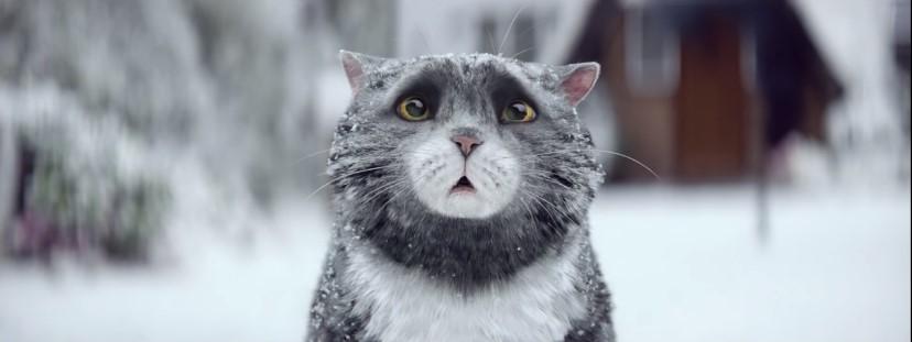 Ролик с рождественским котом за сутки посмотрели уже более 2 млн. раз!