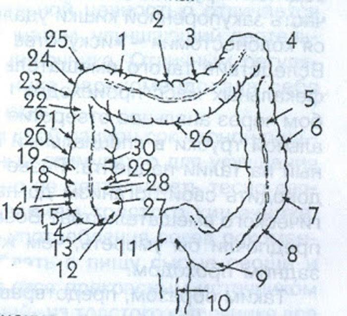 Наш кишечник – стимулирующая система всего организма!