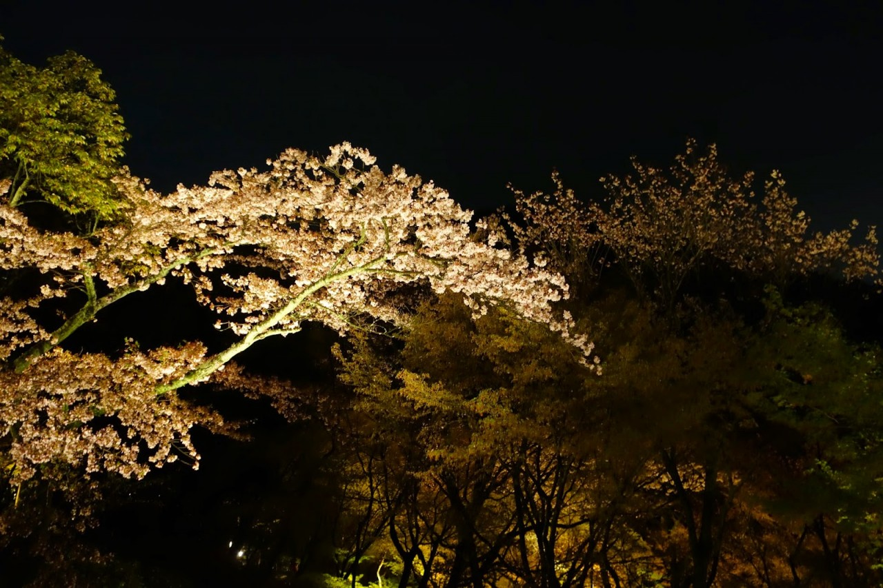 A TRIP TO KYOTO