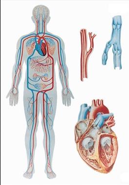 Неправильный подход к лечению болезней ведет к постоянному снижению уровня ци и крови. В результате развиваются хронические заболевания