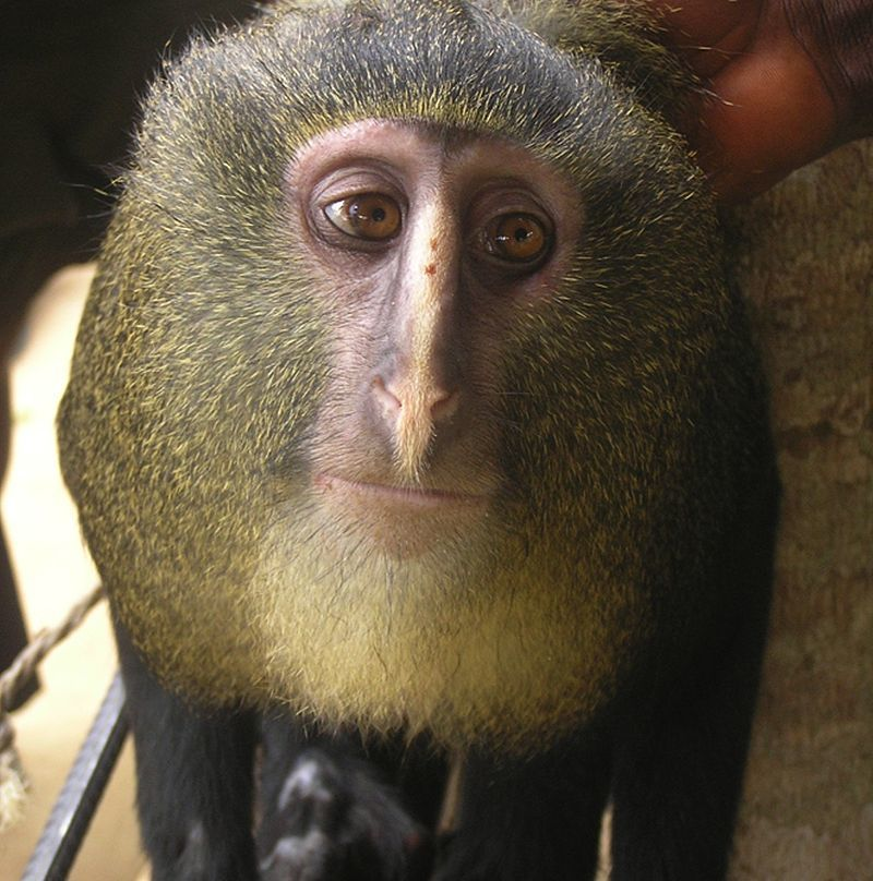 Редкие животные нашей планеты, которых еще можно спасти