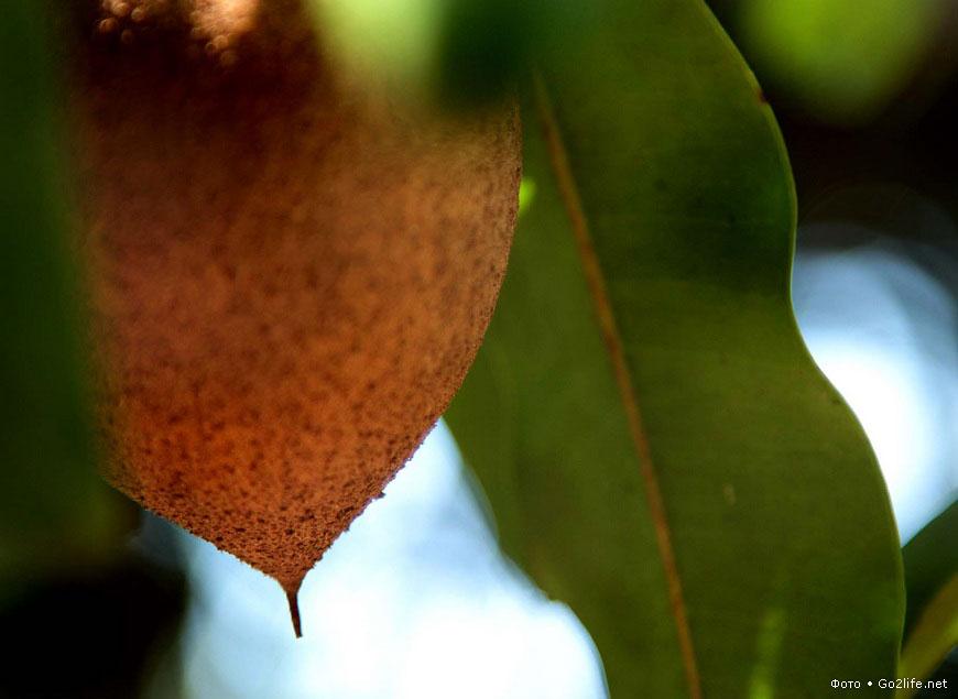 20 фотографий самых экзотических фруктов на Земле
