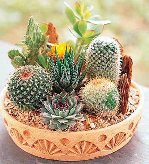 Композиции из кактусов своими
