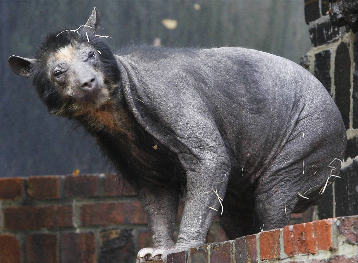 15 животных, которых сложно узнать без шерсти Животные без шерсти, Этот удивительный мир, животные