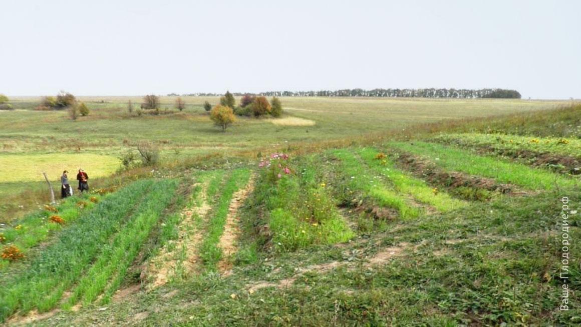 Управление влагой в процессе естественного плодородия