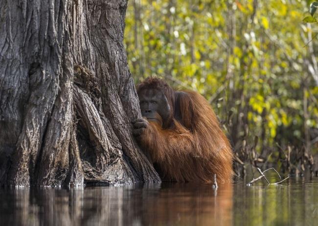 20+фотографий сконкурса National Geographic, которые доказывают, что наша планета— режиссер самого грандиозного шоу воВселенной