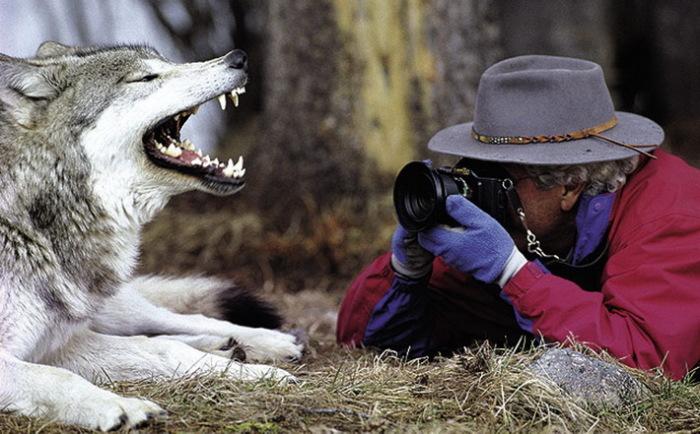 Дж. Датчер и его сосед волк.