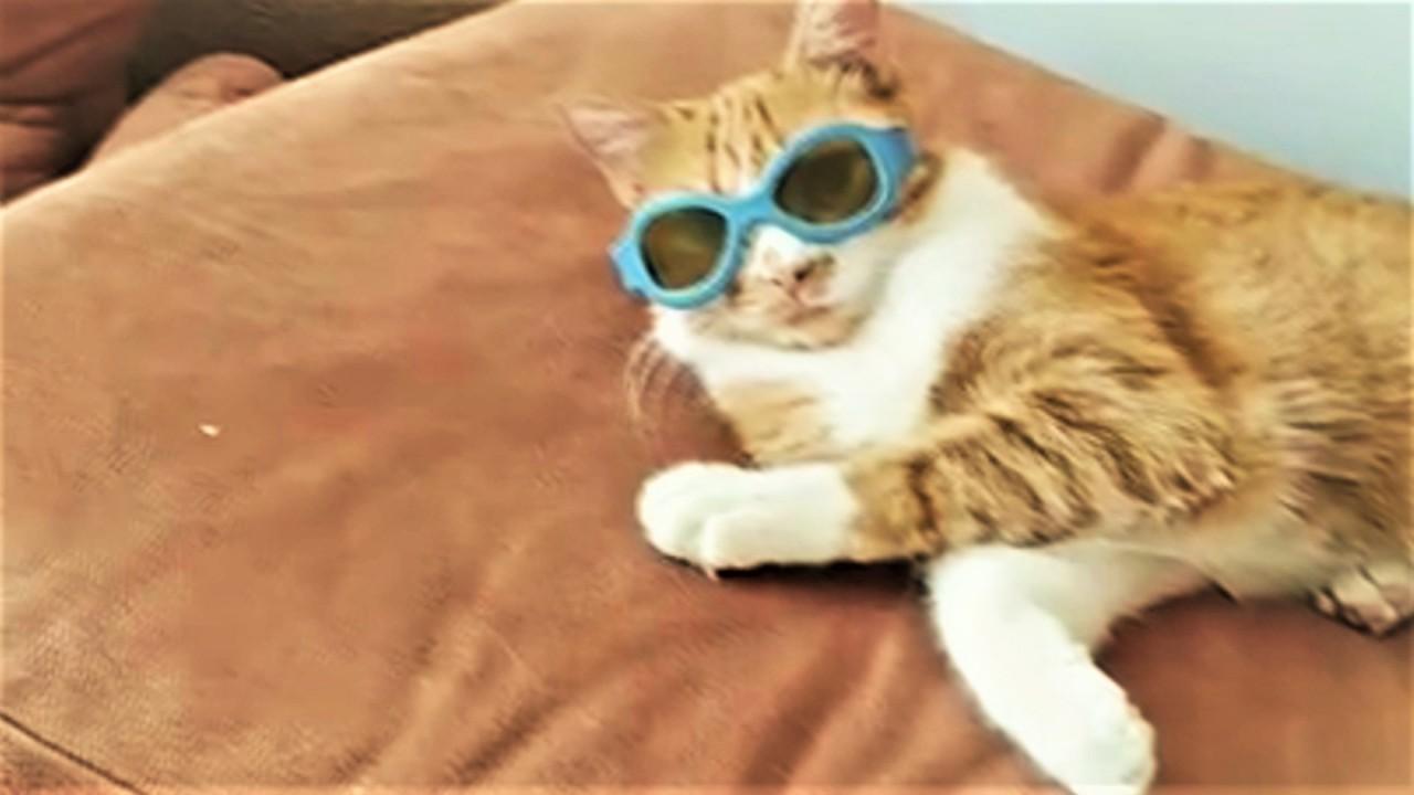 Ох уж эти котики и пёсики! Подборка смешных и милых видео с усатыми и хвостатыми