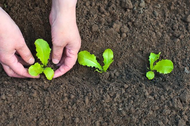 Выращивание рассады цветов: все, что нужно знать новичку