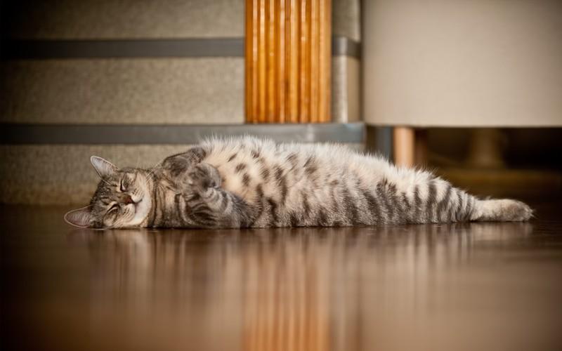 sleepingcats36 Коты, познавшие науку сна