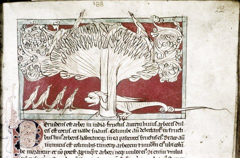 Средневековые бестиарии:  Рукопись Бодлеянской библиотеки