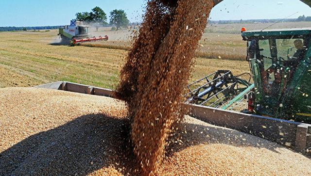Шведские СМИ оценили успехи России в сельском хозяйстве.
