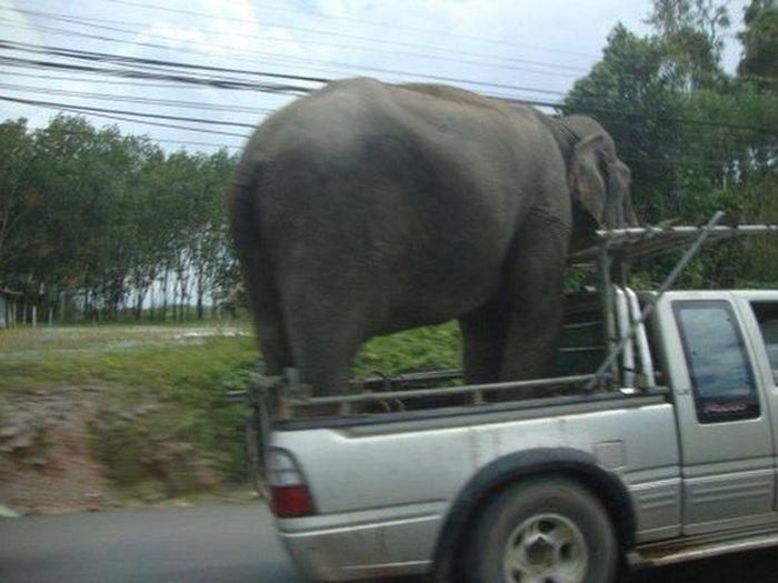 Безумные способы перевозки грузов
