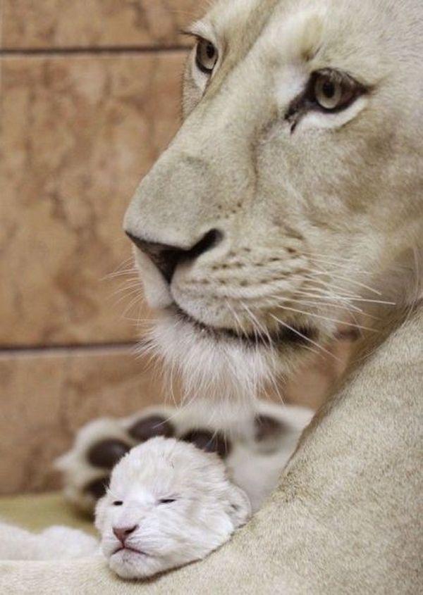 Забавные фото животных для настроения
