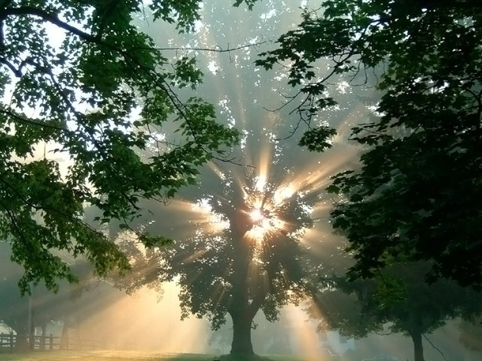 Магия деревьев