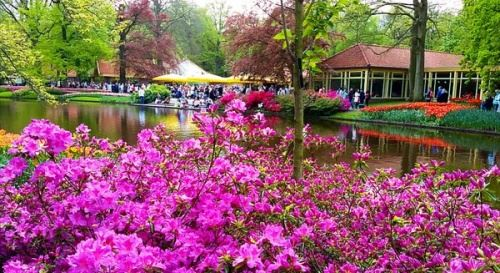 Королевский парк Кёкенхоф - жемчужина Голландии