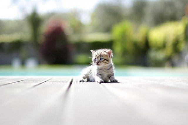 О чем шепчут кошки Original